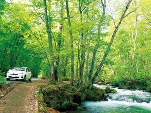 車で移動しながらの奥入瀬渓流