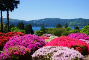 小田急山のホテルの庭園