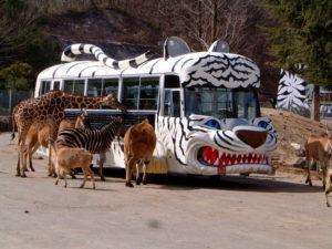 群馬サファリパークの専用バス