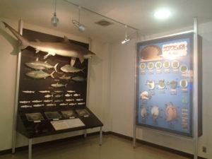 かつうら海中公園海の資料館