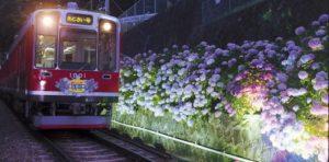 夜のあじさい電車