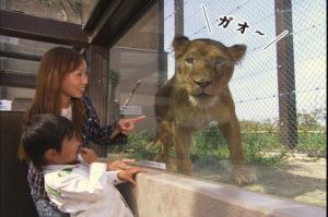 群馬サファリパーク ライオンを観察できるゾーン