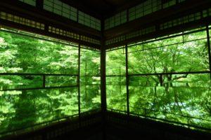 京都瑠璃光院の新緑