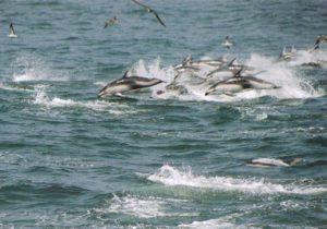 銚子海洋研究所イルカ・クジラウォッチング