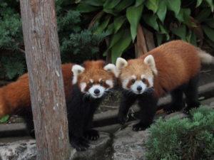 野毛山動物園1