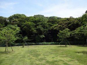 観音崎の森