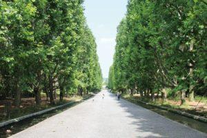 石畳の並木道