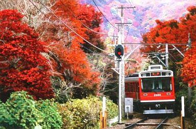 箱根登山鉄道 紅葉