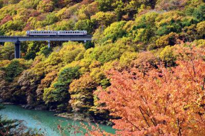 野岩鉄道 紅葉