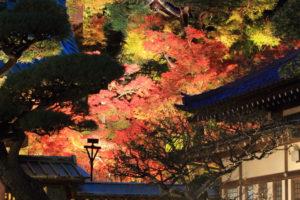 長谷寺の紅葉のライトアップ