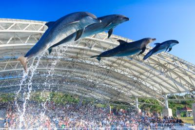 沖縄美ら海水族館イルカショー