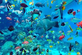 沖縄美ら海水族館 熱帯魚や珍しい深海魚