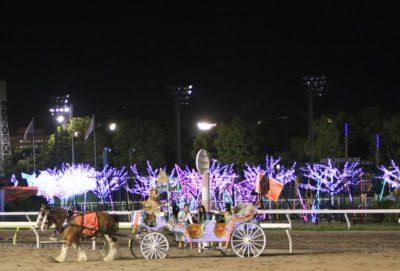 大井競馬場トゥインクルレース