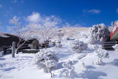 阿蘇 草千里 雪 樹氷