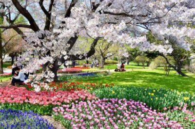 国営昭和記念公園 フラワーフェスティバル