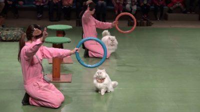 那須どうぶつ王国 ネコのショー