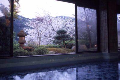 湯河原温泉「ふきや旅館」内風呂からの桜