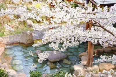 露天風呂から桜