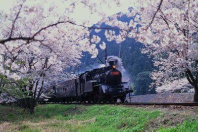 大井川鐵道 家山の桜トンネル1