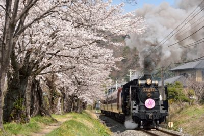 桜の中を走るSLパレオエクスプレス